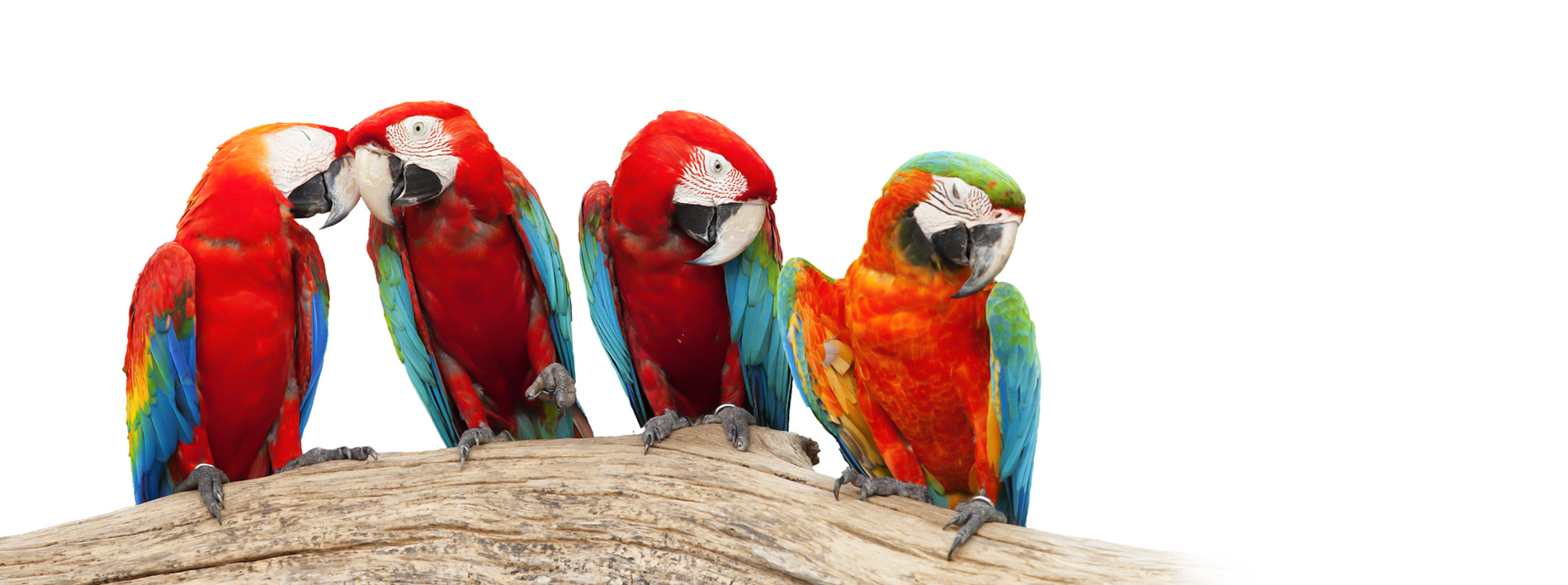 ptaki i gryzonie
